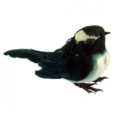 Willy Wagtail Feathered Bird