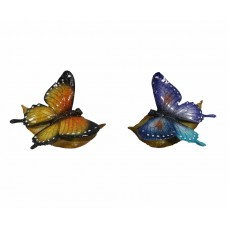 Bronze & Blue Butterfly