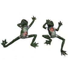 Frog, Assorted
